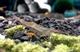 Image de Kit anti algues 2